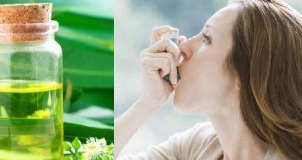 L'eucalyptus pour soulager les problèmes respiratoires